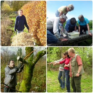 conservation volunteering in wales