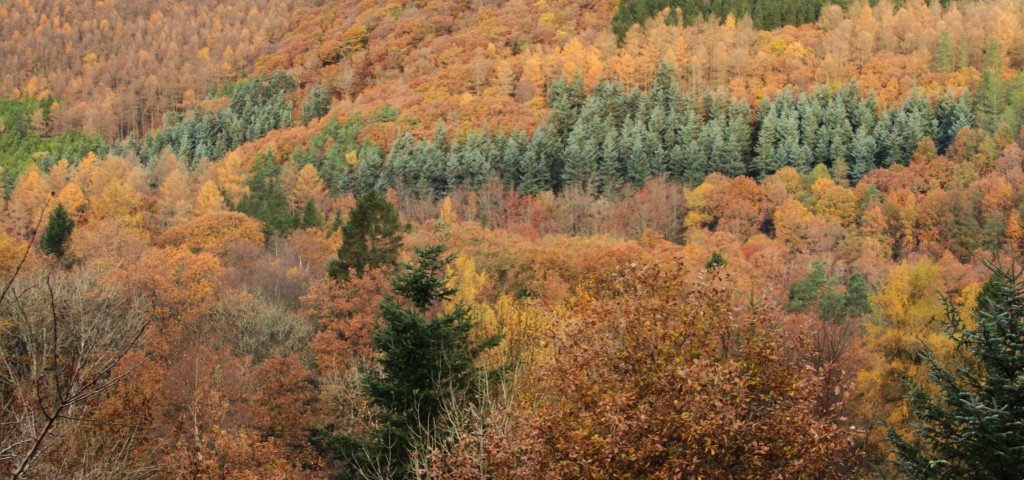 It's been an amazing autumn – can you believe this was taken near Tregaron on 17 November?