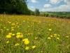 Spring meadow at Denmark Farm Conservation Centre