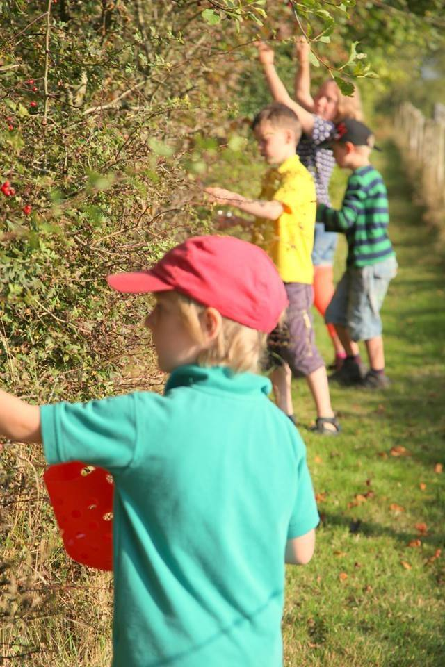 Picking berries and hedgerow fruits