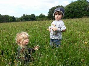 meadows