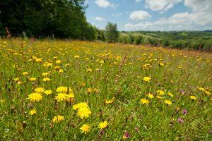 Wildlife rich hay meadow