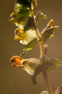 Identifying Flowering plants