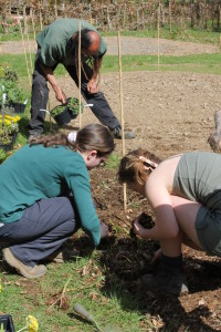 Conservation volunteers at Denmark farm working in the wildlife garden