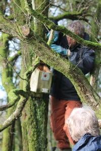 Monitoring bird box