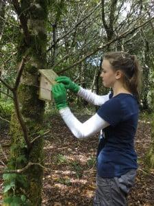 Volunteer checking dormouse box