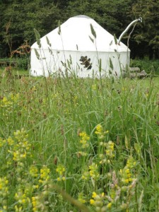 Denmark Farm Eco Campsite - Meadows