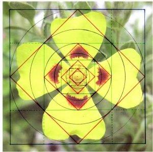 square-geometry123