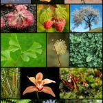 plant diversity