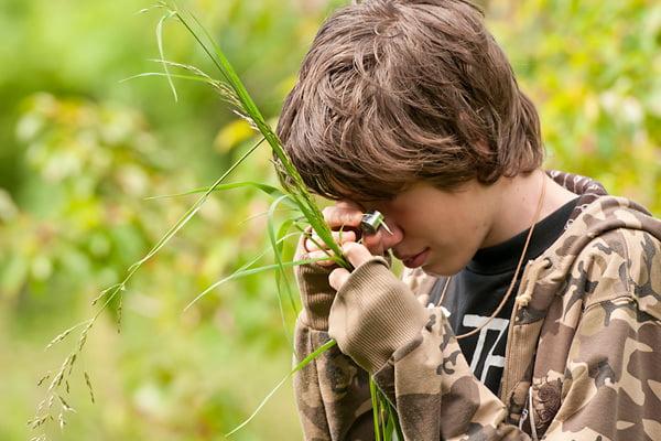 grasses, sedges & rushes
