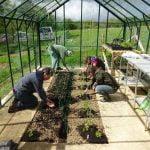 planting greenhouse
