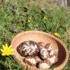 raw chocolate easter egg