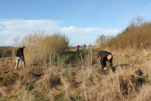 Harvesting Willow Wet System
